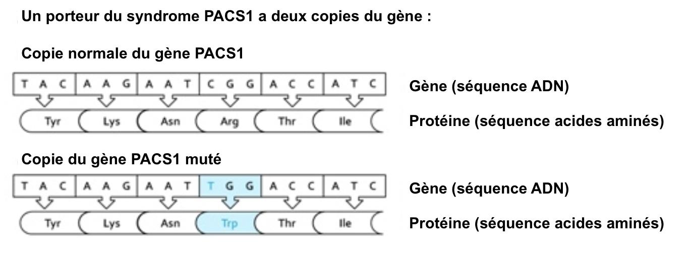 Molecular characteristics pacs1 fr